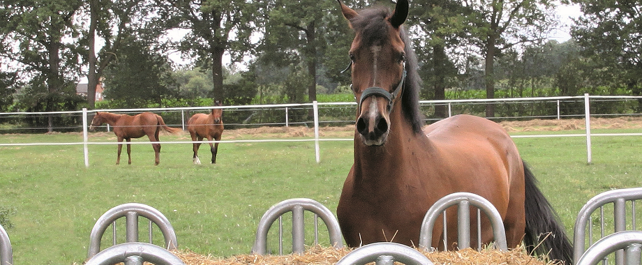 De specialist voor de inrichting van uw paardenstal, weide, paddock en rijbaan